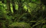 forest-desktop-wallpaper